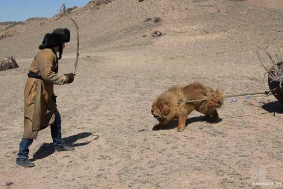 Фото в Тибете