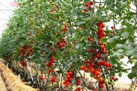 Большой урожай